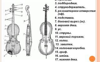 Как устроена скрипка сколько на ней струн и другие интересные факты о скрипке…